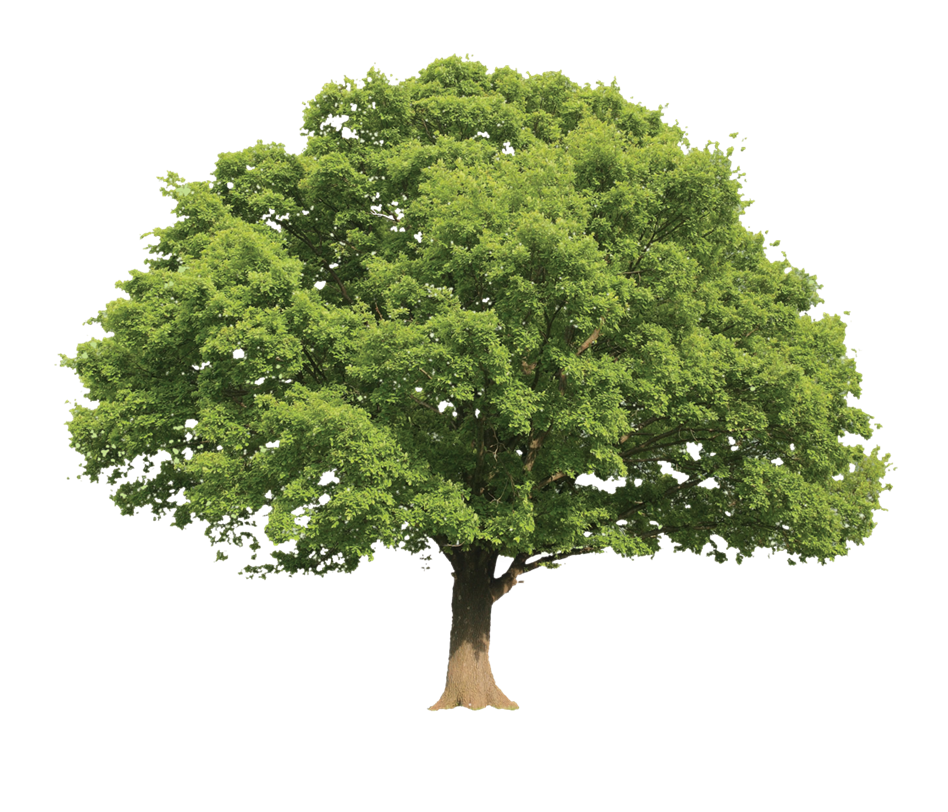 Amerisource Tree image
